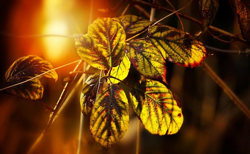 Leaves and Light-052.jpg