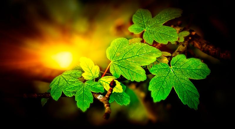 Leaves and Light-152.jpg