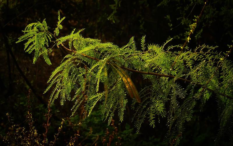 Leaves in the Light-061.jpg