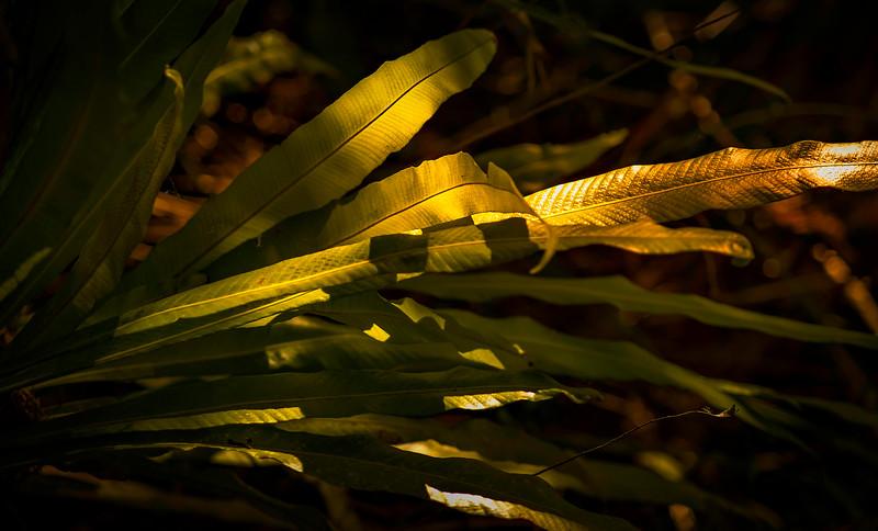 Leaves and Light-172.jpg