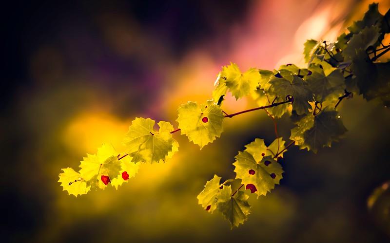 Leaves and Light-080.jpg
