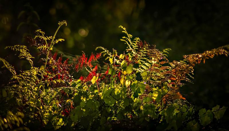Leaves and Light-115.jpg