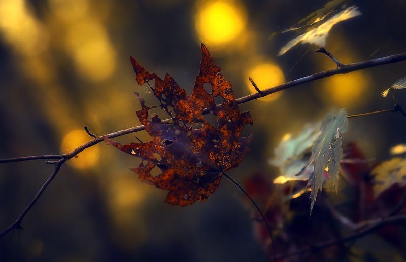 Leaves in the Light-074.jpg