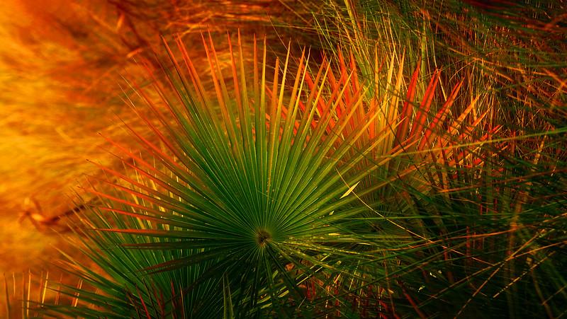 Leaves and Light-150.jpg