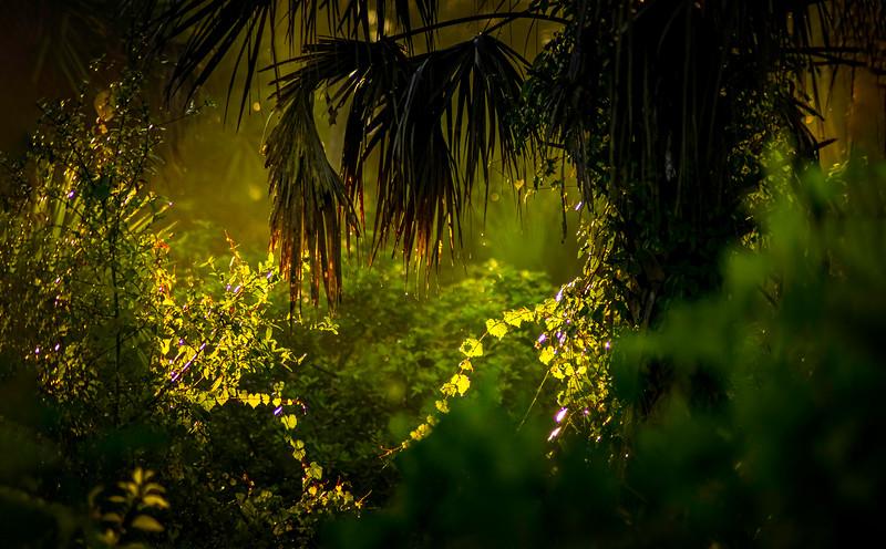 Leaves and Light-100.jpg