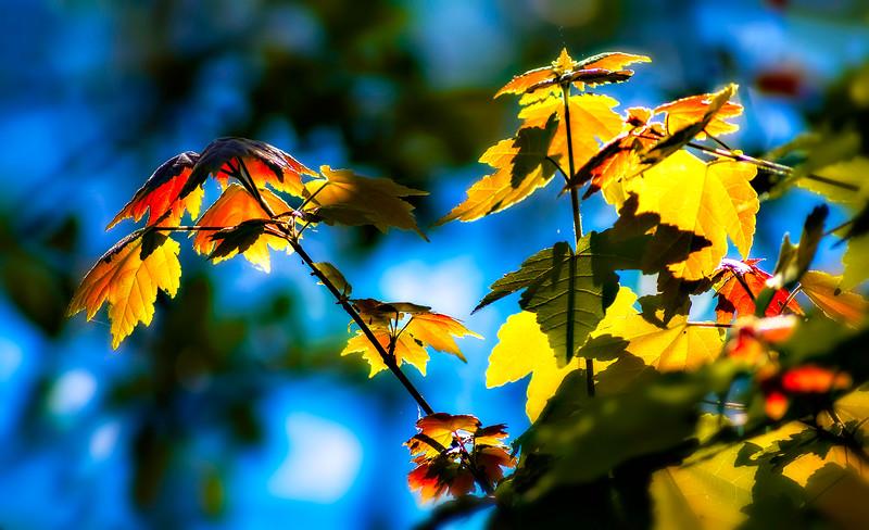 Leaves in the Light-005.jpg