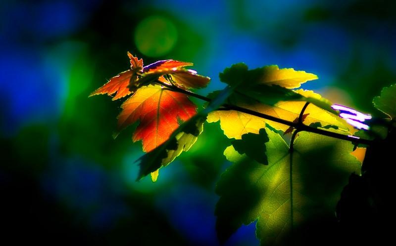 Leaves and Light-024.jpg