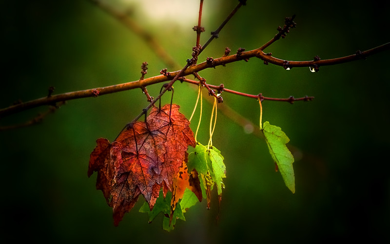 Leaves in the Light-062.jpg