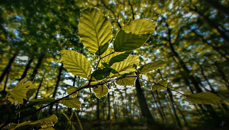 Leaves in the Light-001.jpg