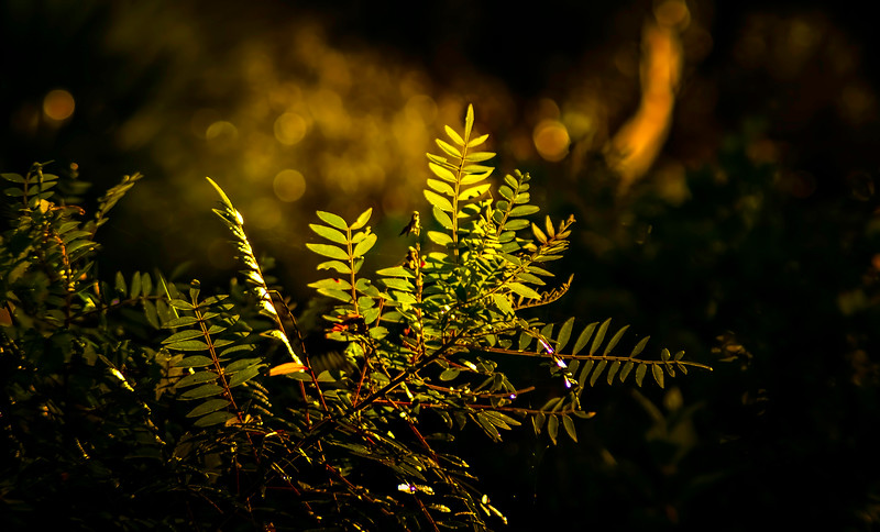 Leaves and Light-114.jpg
