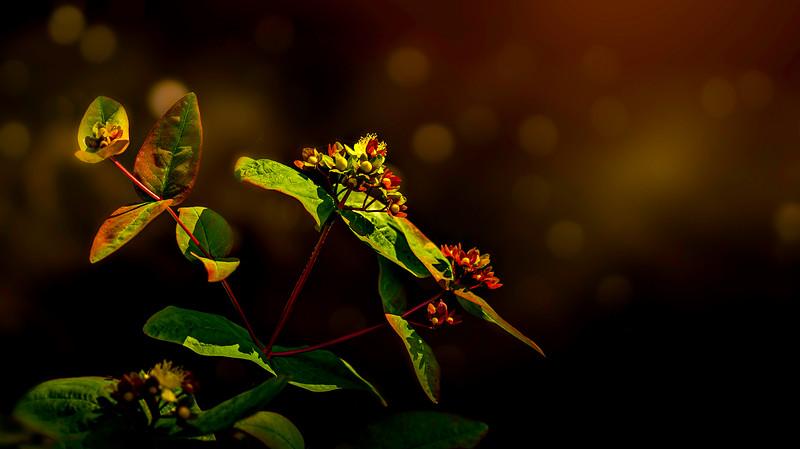 Leaves and Light-083.jpg