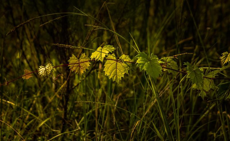 Leaves and Light-167.jpg
