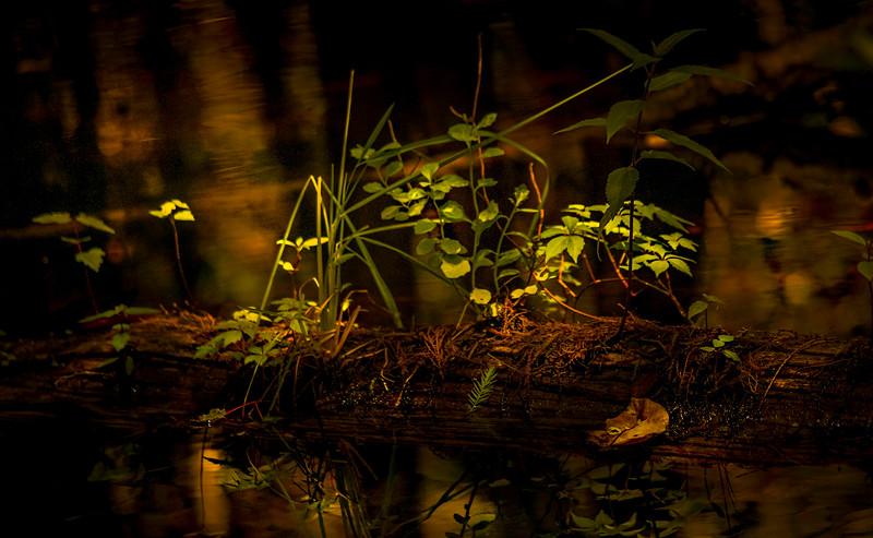 Leaves and Light-109.jpg