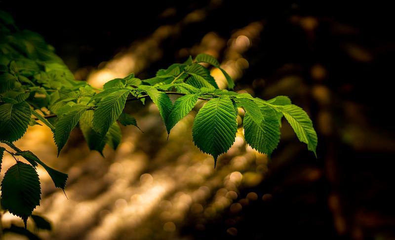 Leaves and Light-163.jpg