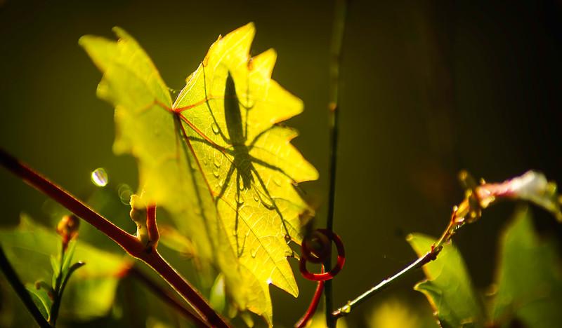 Leaves and Light-028.jpg