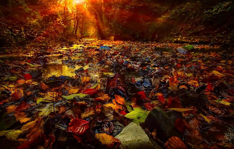 Leaves and Light-049.jpg