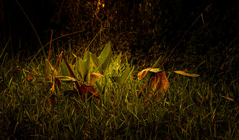 Leaves and Light-130.jpg