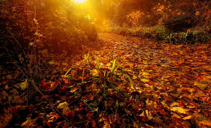 Leaves in the Light-034.jpg
