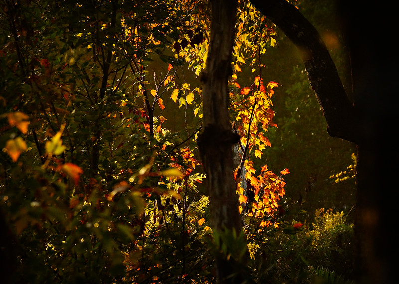 Leaves in the Light-071.jpg