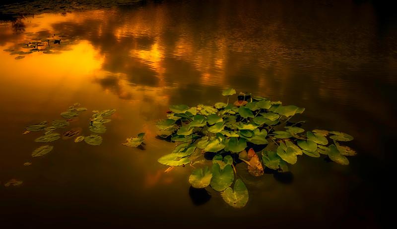 Leaves and Light-110.jpg