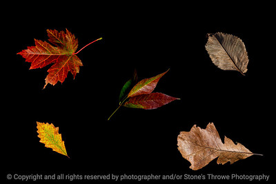 015-leaves_autumn-studio-27dec19-12x08-278-500-1000