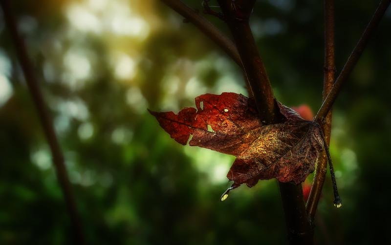 Leaves in the Light-066.jpg