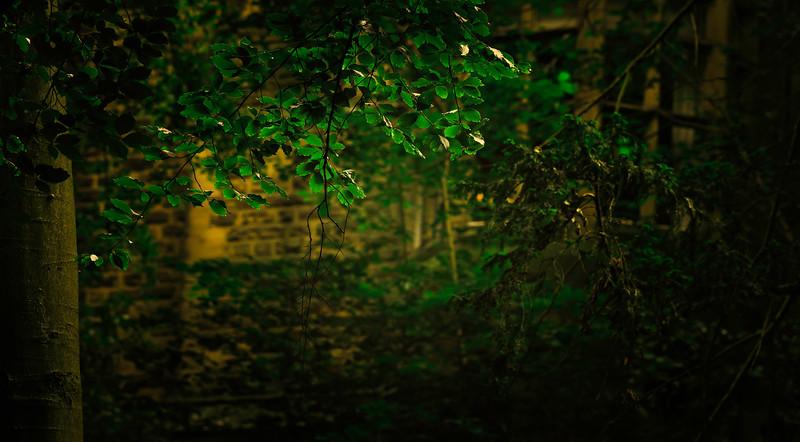 Leaves and Light-003.jpg