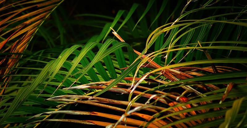 Leavces in the Light-053.jpg