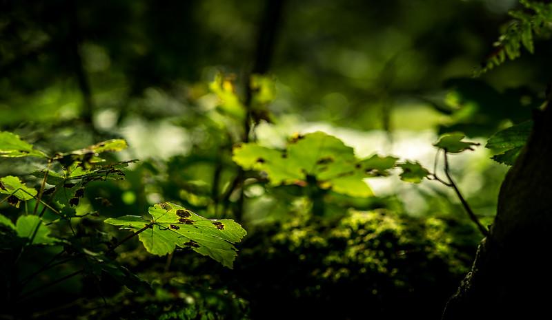 Leaves in the Light-008.jpg