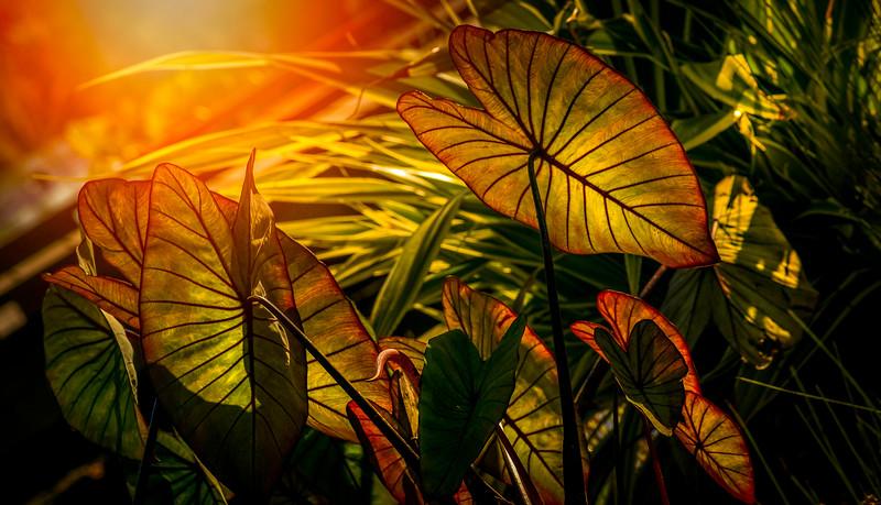 Leaves and Light-084.jpg