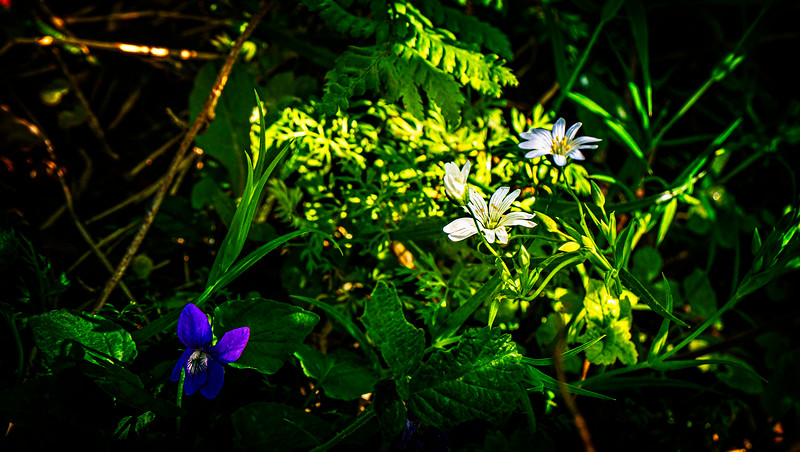 Leaves and Light-004.jpg