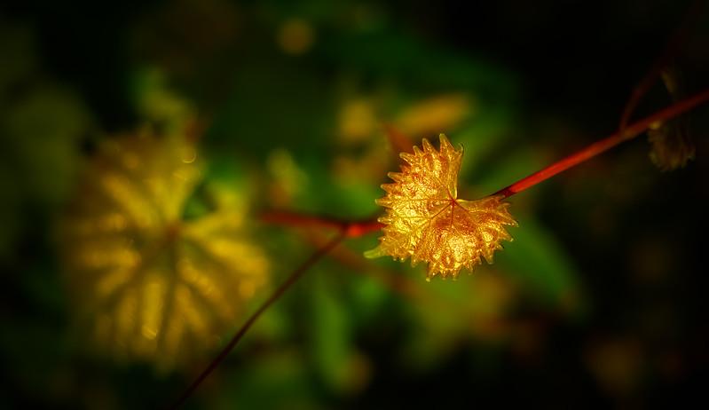 Leavces in the Light-050.jpg