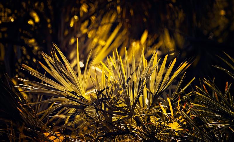 Leaves and Light-071.jpg