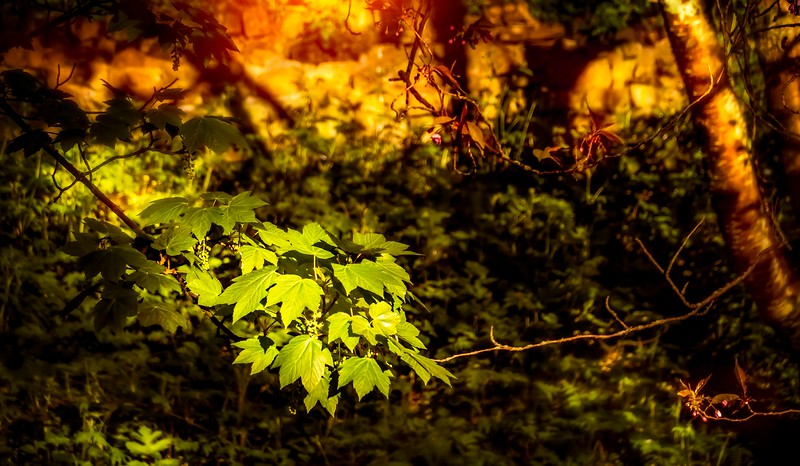 Leaves and Light-053.jpg