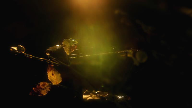 Leaves and Light-015.jpg