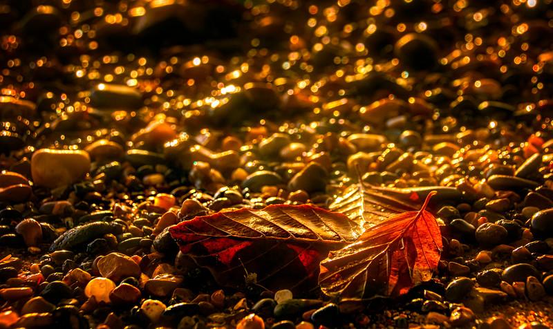 Leaves and Light-031.jpg