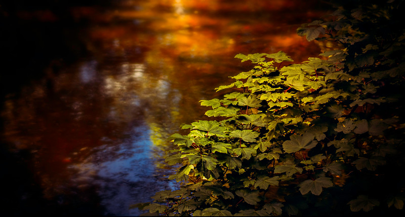 Leaves and Light-164.jpg