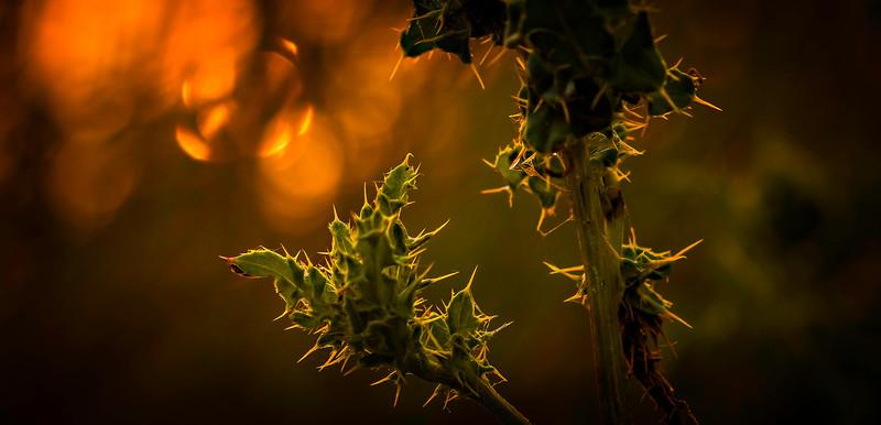 Leaves and Light-025.jpg