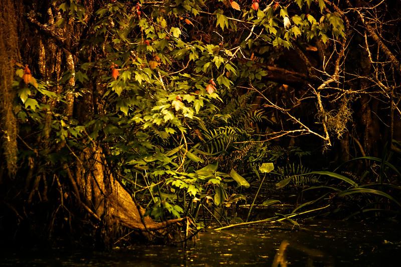 Leaves and Light-134.jpg