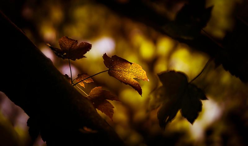 Leaves and Light-166.jpg
