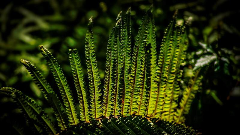 Leaves in the Light-007.jpg