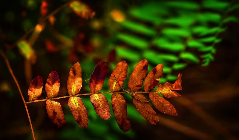 Leaves in the Light-073.jpg