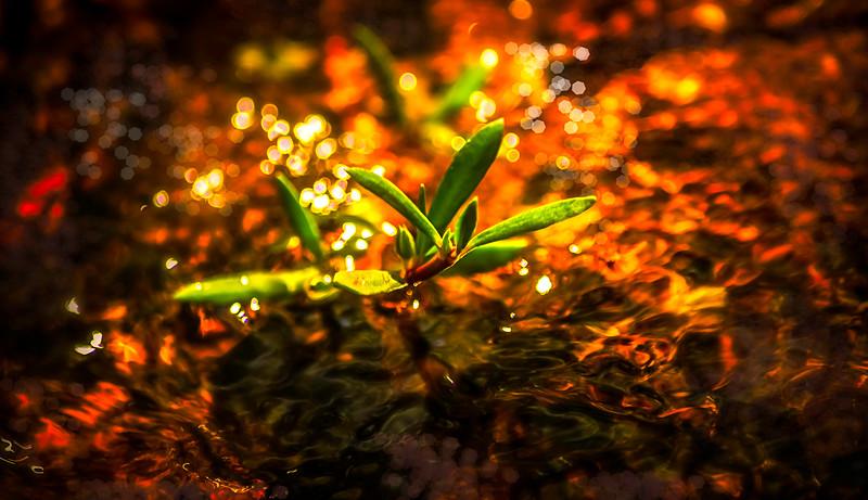 Leaves and Light-060.jpg