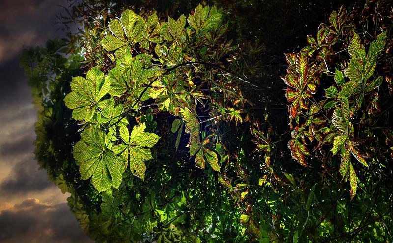 Leavces in the Light-024.jpg