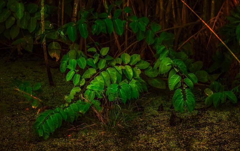 Leaves in the Light-067.jpg