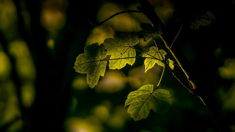 Leaves and Light-133.jpg