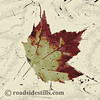 Autumn Maple Leaf ~ Textuted #521