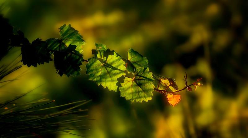 Leaves and Light-153.jpg
