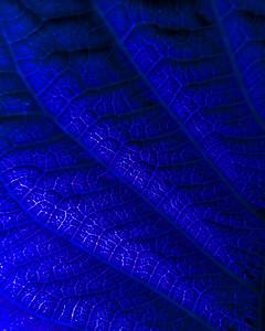 79 DSC02077 Dark Blue