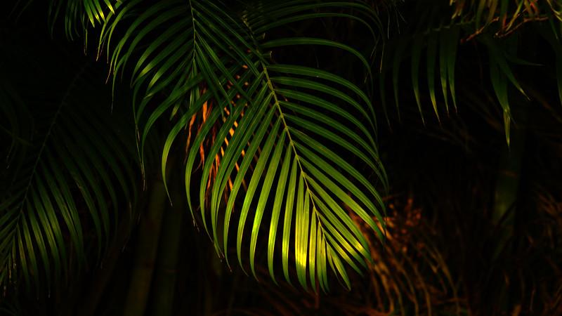 Leavces in the Light-057.jpg